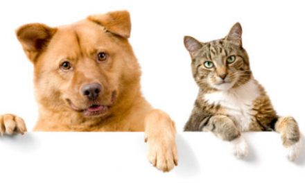 NEW DATE:  Free Rabies Clinic Sat 2/6, 1-3pm